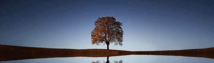 Vägen framåt – passivitet