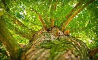 Hållbara investeringar – Better Globe